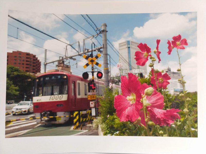京急の赤い電車の横に咲く赤い花